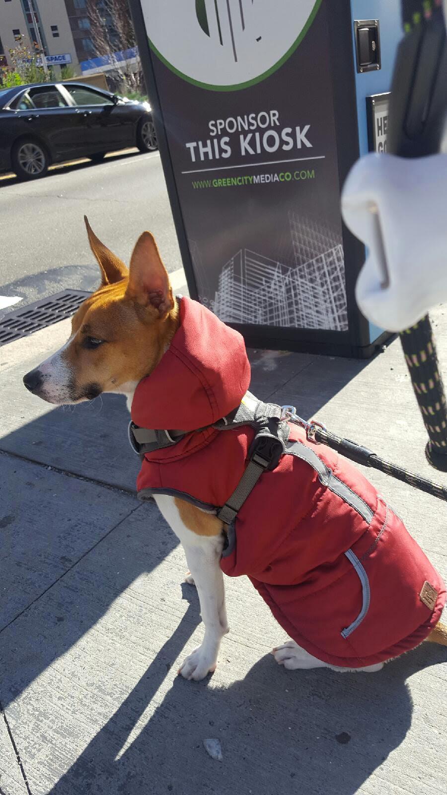 Dog Walking Companies Brooklyn